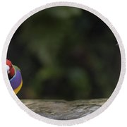 Colorful Guilian Finch And The Plain Bird Round Beach Towel