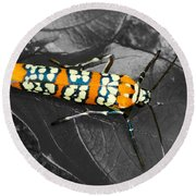 Colorful Insect - Ornate Bella Moth Round Beach Towel