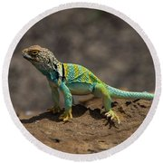 Colorful Lizard Round Beach Towel