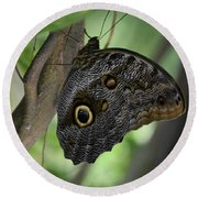 Colorful Markings On A Blue Morpho Butterfly On A Tree Trunk Round Beach Towel