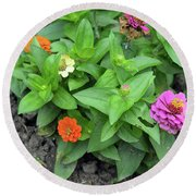 Colorful Pink And Orange Flowers In Green Leaves Bush In The Garden. Round Beach Towel