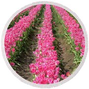 Colorful Rows Of Tulips Round Beach Towel