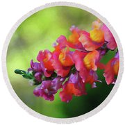 Colorful Snapdragon Round Beach Towel