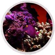 Colors Of Underwater Life Round Beach Towel