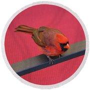Colour Me Red - Northern Cardinal - Cardinalis Cardinalis Round Beach Towel