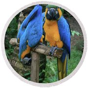 Colourful Macaw Pohakumoa Maui Hawaii Round Beach Towel