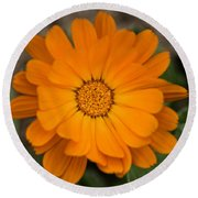 Colourful Orange Signet Marigold  Round Beach Towel