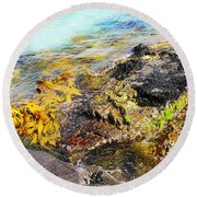 Colourful Sea Life - Fishers Point Round Beach Towel