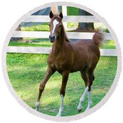 Colt Round Beach Towel