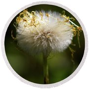 Coltsfoot Bad Hair Day 3 Round Beach Towel