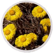 Coltsfoot Ring Round Beach Towel