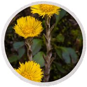 Coltsfoot Trio Round Beach Towel