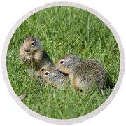 Columbian Ground Squirrels Round Beach Towel
