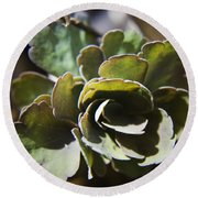 Columbine Foliage Round Beach Towel