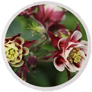 Columbine In Spring Round Beach Towel
