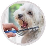 Combing Beards Of The White Dog Round Beach Towel