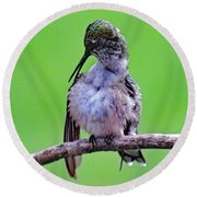 Combing His Feathers - Ruby-throated Hummingbird Round Beach Towel