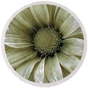 Coming Up Daisies 2 Round Beach Towel