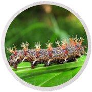 Comma Caterpillar Round Beach Towel