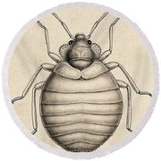 Common Bedbug, Cimex Lectularius Round Beach Towel