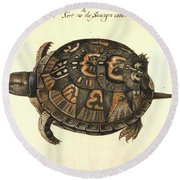 Common Box Tortoise, 1585 Round Beach Towel