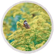 Common Buckeye Butterfly Hides In The Goldenrod Round Beach Towel
