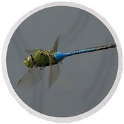 Common Darner All Of A Hover Round Beach Towel
