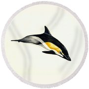 Common Dolphin Round Beach Towel