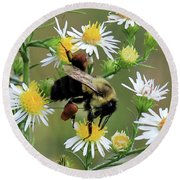 Common Eastern Bumblebee  Round Beach Towel