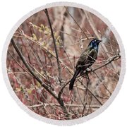 Common Grackle In Spring Round Beach Towel