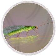Common Green Lacewing - Chrysoperla Carnea Round Beach Towel