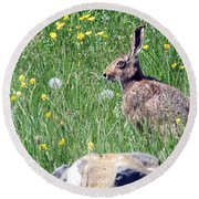 Common Hare Round Beach Towel