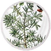 common juniper, Juniperus communis Round Beach Towel
