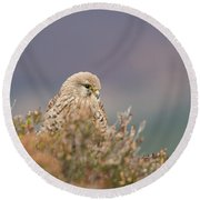 Common Kestrel Falco Tinnuculus Perched On Rock Round Beach Towel