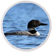 Common Loon, Framed Round Beach Towel