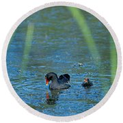 Common Moorhen And Her Baby Round Beach Towel