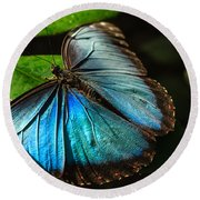 Common Morpho Blue Butterfly Round Beach Towel