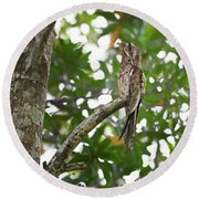 Common Potoo Costa Rica Round Beach Towel