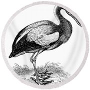 Common Stork Round Beach Towel