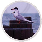 Common Tern Sterna Hirundo Round Beach Towel