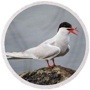 Common Tern Round Beach Towel