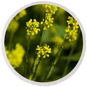Common Wintercress Flowers Round Beach Towel