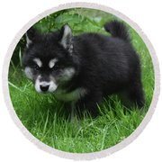 Concern Expressed On The Face Of An Alusky Pup Round Beach Towel