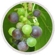 Concord Grapes On The Vine Round Beach Towel