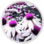 Cone Flower Delight Round Beach Towel by Kevyn Bashore
