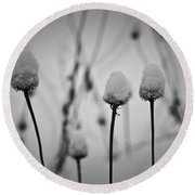 Coneflower Seedheads Covered In Snow Round Beach Towel
