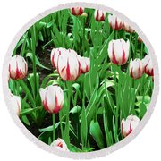 Confederation Tulips Round Beach Towel