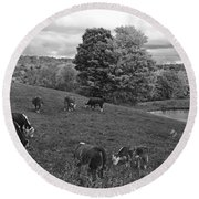 Congregating Cows. Jenne Farm Cow Reading Vermont Black And White Round Beach Towel
