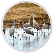 Congregating Sandhill Cranes Round Beach Towel