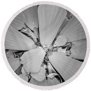 Conservatory Nature In Black And White 1 Round Beach Towel